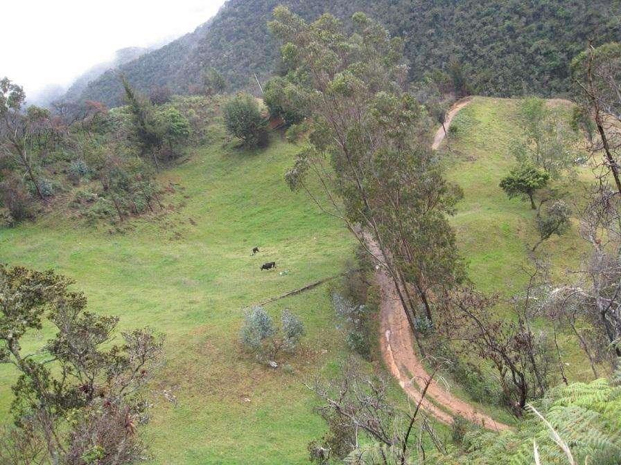 Propiedad de 9 Hectarias sector Totorillas