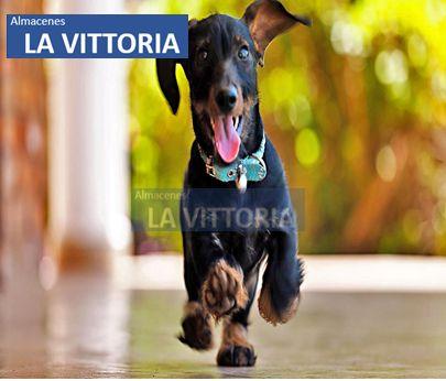 Perros Mascotas Correa Regulable Y Seguro