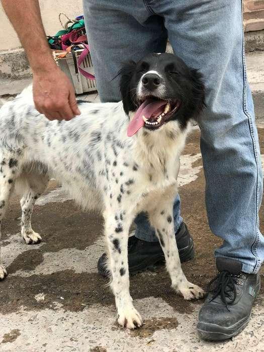 Perro macho adulto tamaño grande en adopcion Dagda