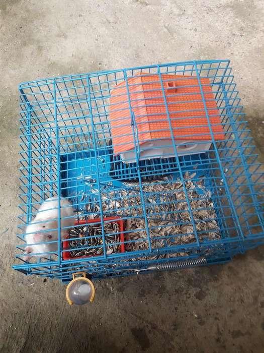 Vendo Hamster con Jaula Y Todo