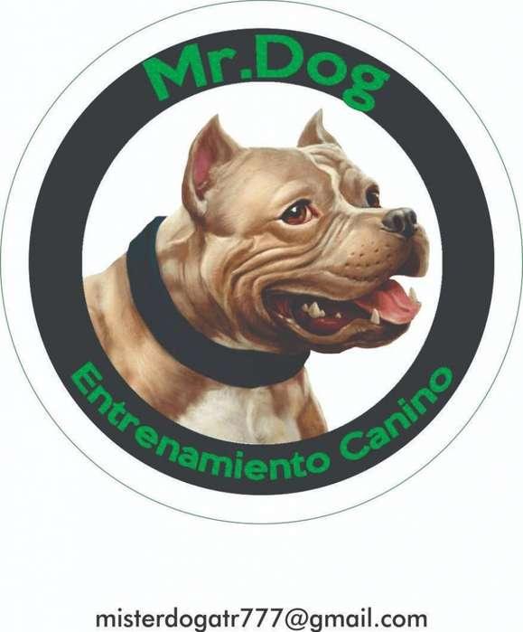 CURSO DE <strong>adiestramiento</strong> CANINO