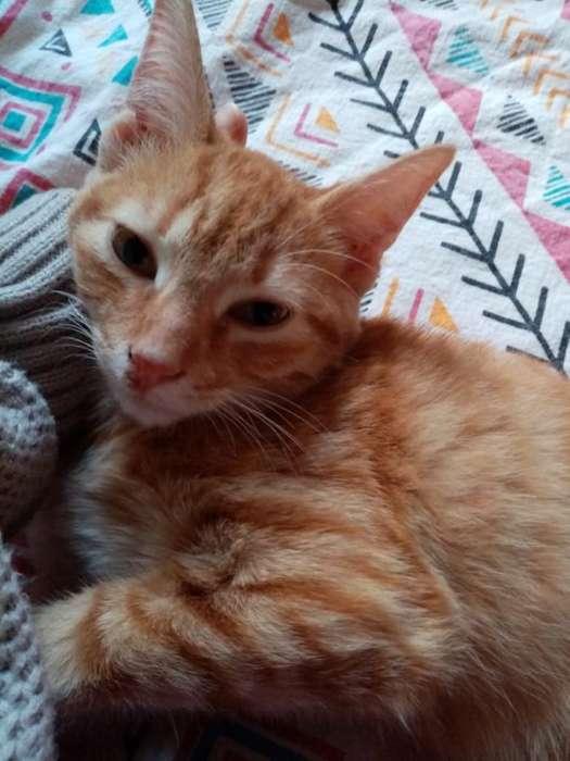 Hermoso Gatico 4 Meses gato 4 Mese Adopc