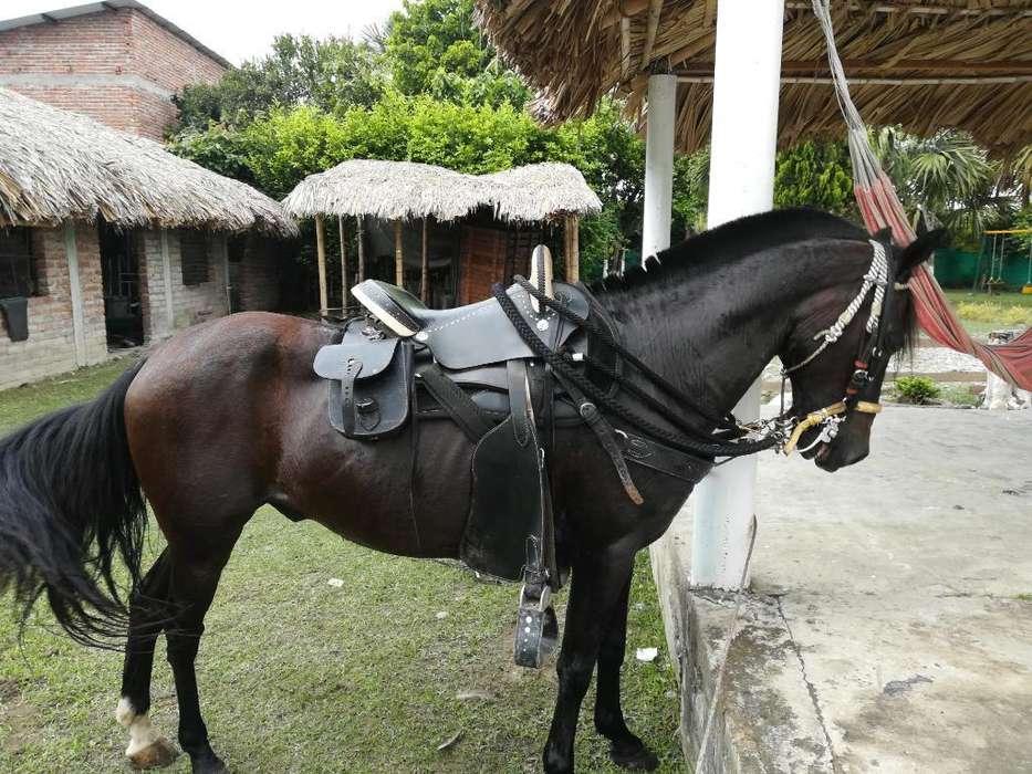 <strong>caballo</strong> Troton