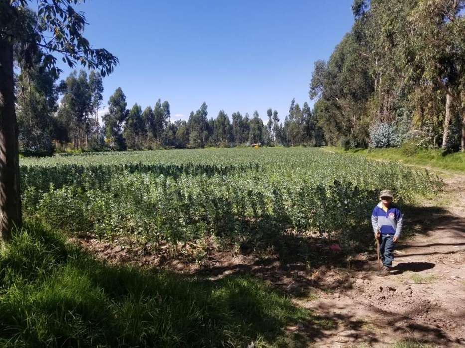 Vendo 22 000 m2 en la cc margen derecha la huaycha huancayo