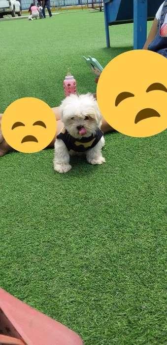 Quiero Adoptar Un Perrito