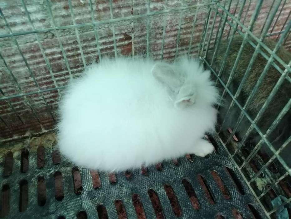 Conejos Máscotas Llamando Al 3143559923