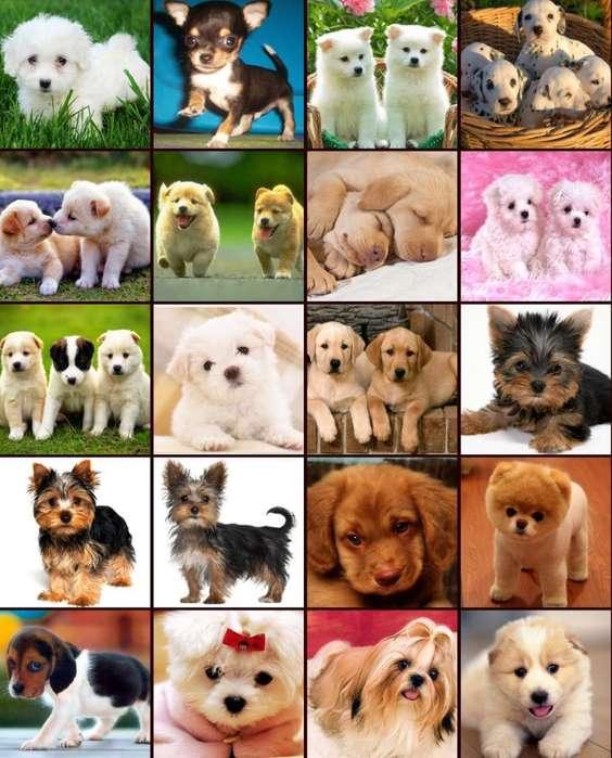 Vendo Cachorros de Todas Las Razas