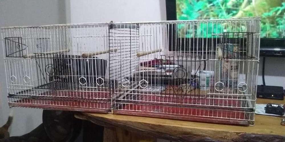 Jaulas Aves Pájaros