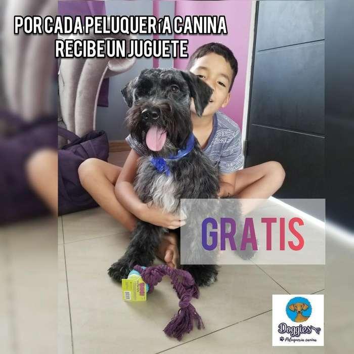 Peluquería Canina Promociones