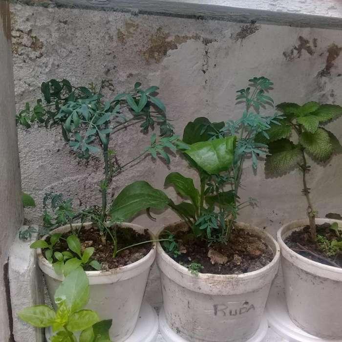 Se venden hermosas plantas aromáticas