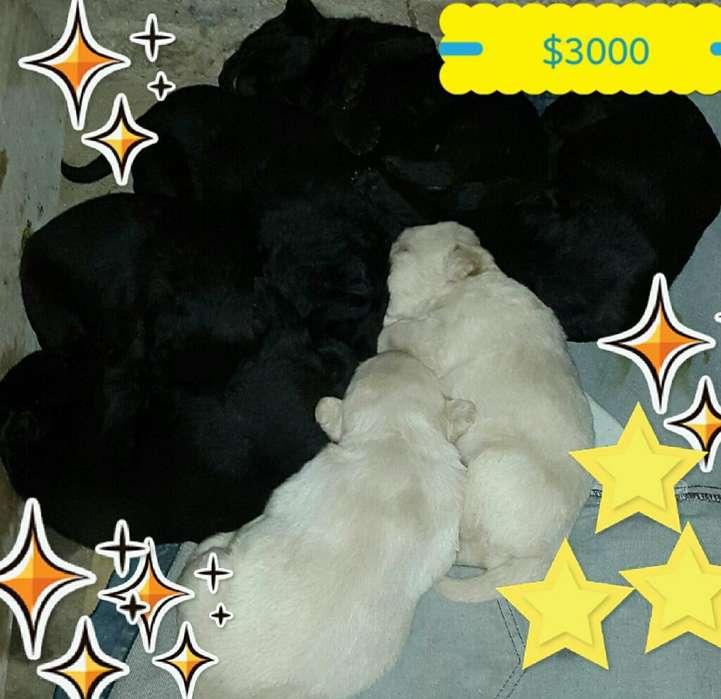 Vendo a 3000 Cachorro Tel.3794859908