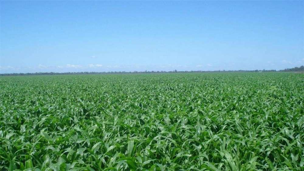 Consultar dirección - UD 6.000.000 - Terreno en Venta