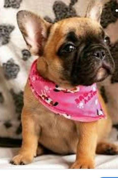 Vendo Linda <strong>bulldog</strong> Frances 3217333686