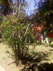 Alquilo Chalet en San Bernardo