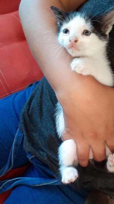 Doy en Adopción Gatitos
