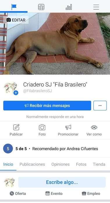 Fila Brasilero