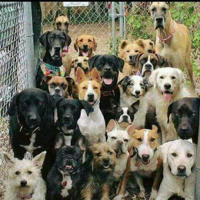Vendo Cachorros de Raza