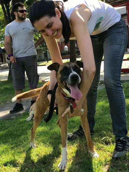 Perro macho adulto tamaño mediano en adopcion! Maravilla