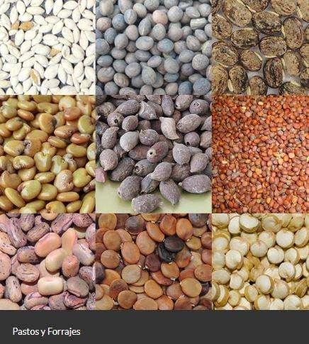 Venta de todo tipo de semillas al por mayor