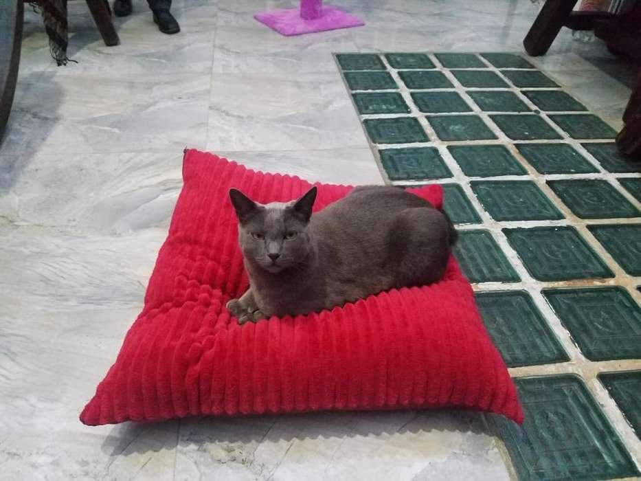 Puffs Para.mascotas-almohadog