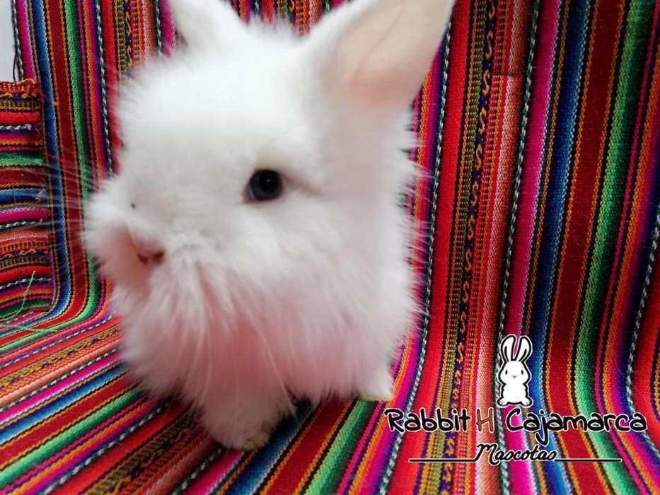 Mascotitas Conejos