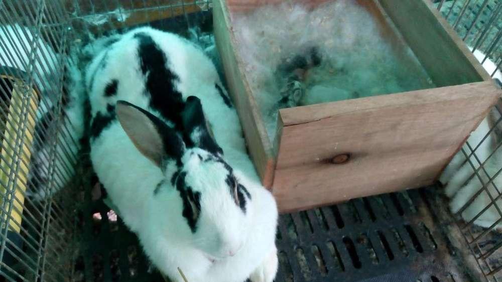 Imponderables Conejos Giga Te 3143559923