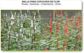 EXTRUSORAS PARA MALLA DE FLORES, CAPUCHÓN