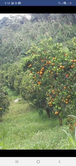 Vendo Finca en Río Negro