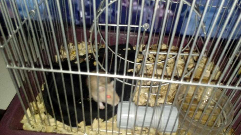 Jaula para Hamster Y Hamster