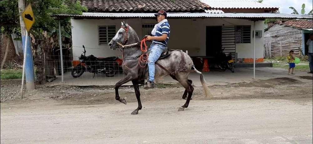 <strong>caballo</strong> Muy Bueno