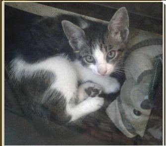 Linda y Dulce gatita busca un hogar que la cuide hasta el final de sus días