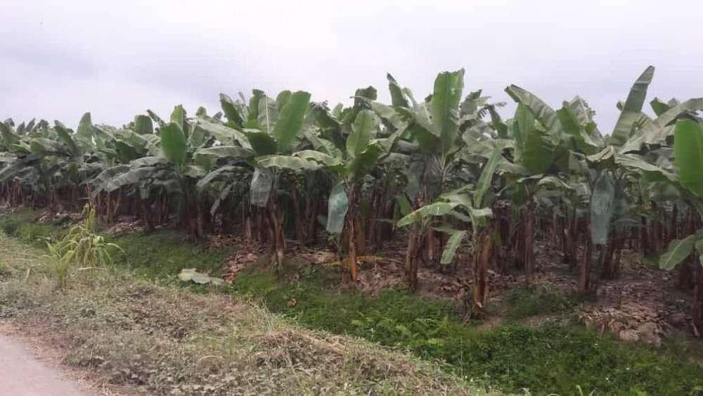 Bananera de venta sector la Troncal provincia del Cañar