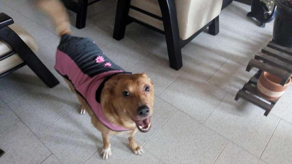 traje impermeable para perro raza mediana
