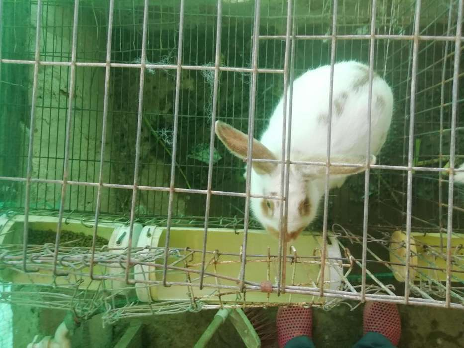 Conejos en Bucaramanga