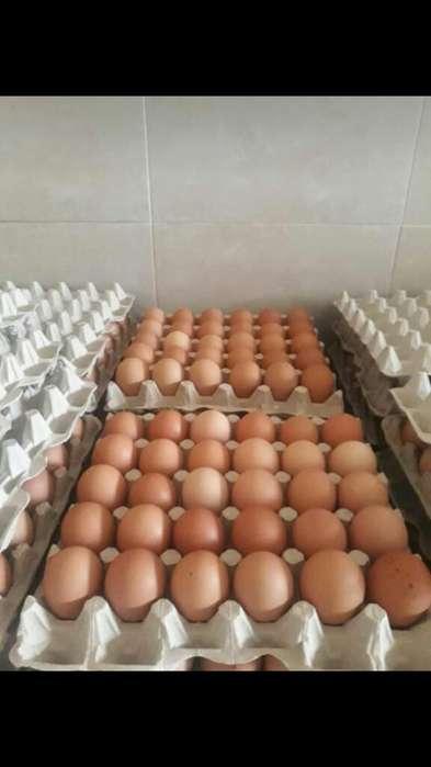 Venta de Huevos Grandes