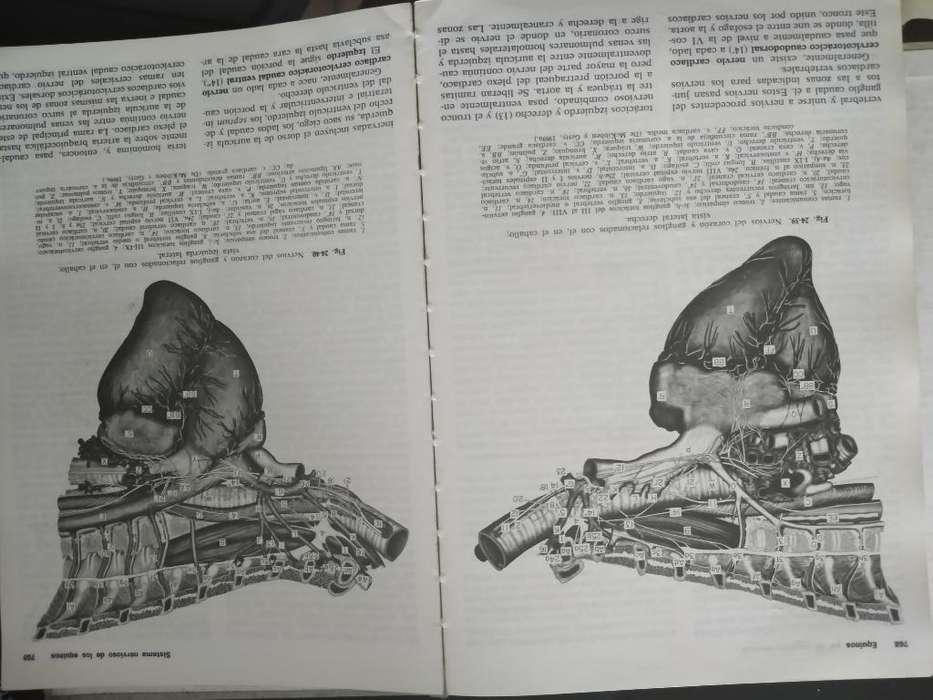 Vendo Anatomía de Los Animales Doméstico