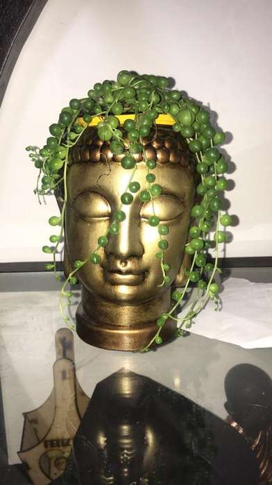 Camandula de Buda