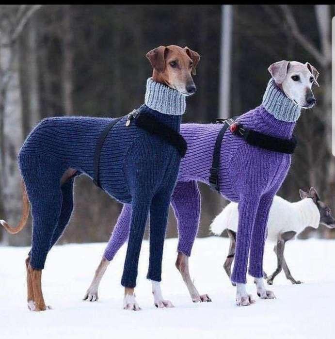 BARATOS <strong>cachorro</strong>S GALGOS ESPAÑOLES