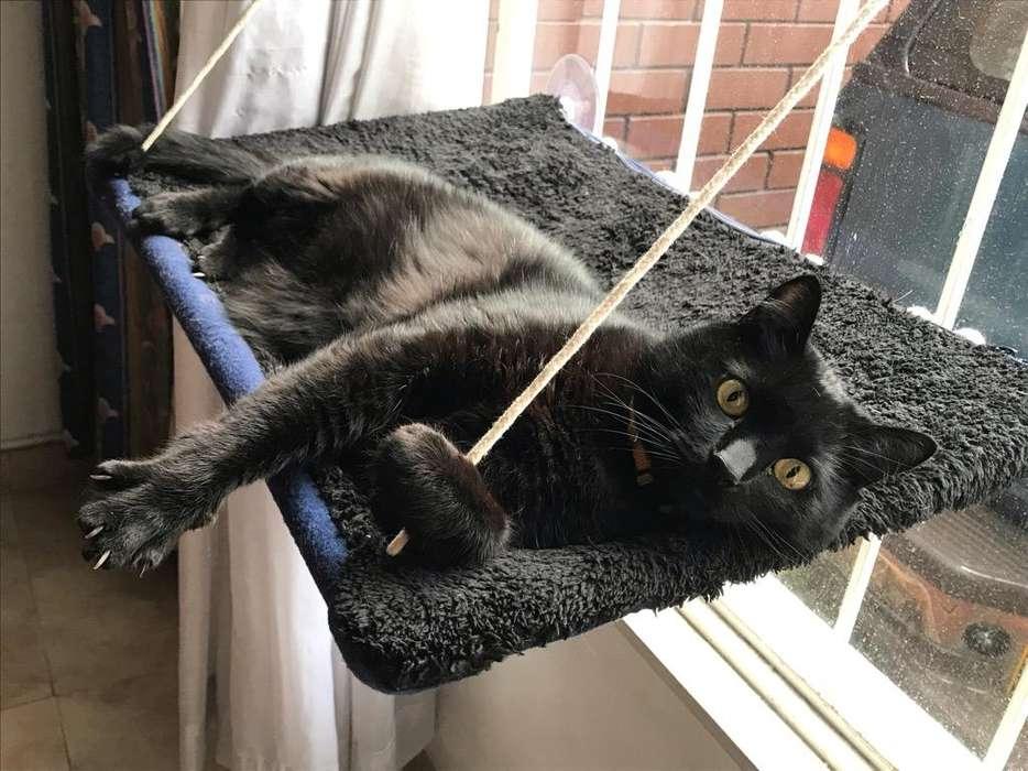 Hamacas para Gatos