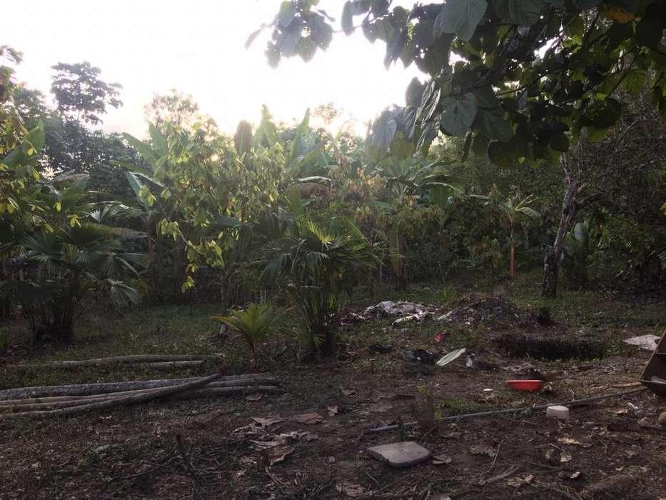 Vendo Terrenos en Tingo Maria Ocasion