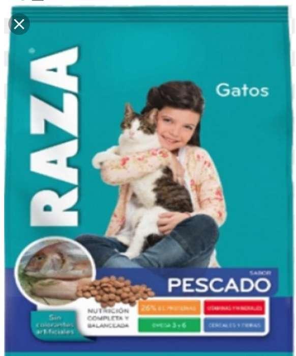 Raza. Alimento de Gato