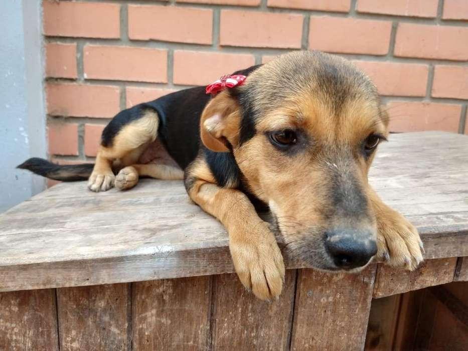 Cachorrita de 8 Meses en Adopción