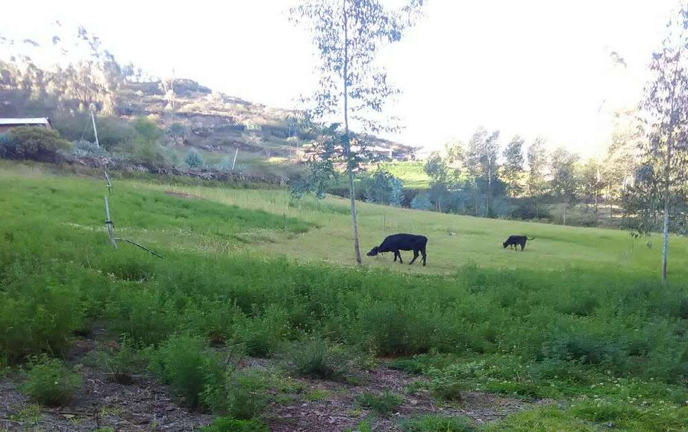 OCACION Vendo Terreno de 5.000m2