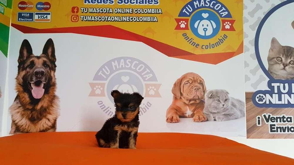Jugueton Yorkshire Terrier mini Fantastico