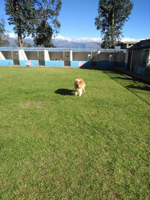 Hospedaje Canino Castle Dog