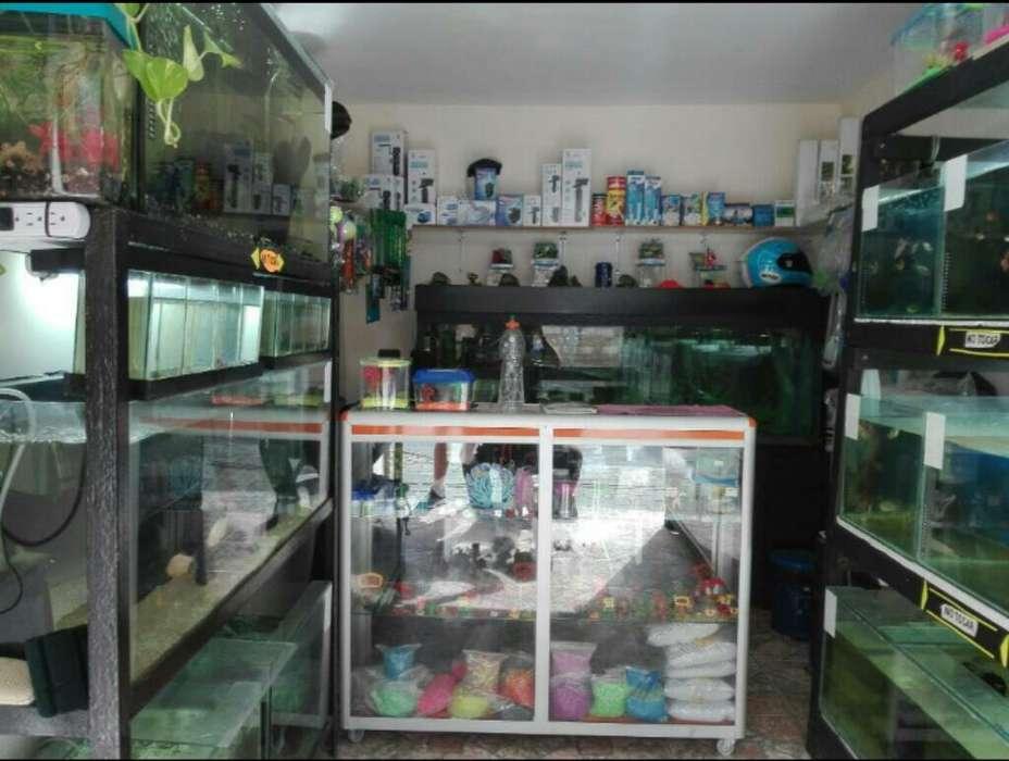 Acuario Tienda Peceras Peces