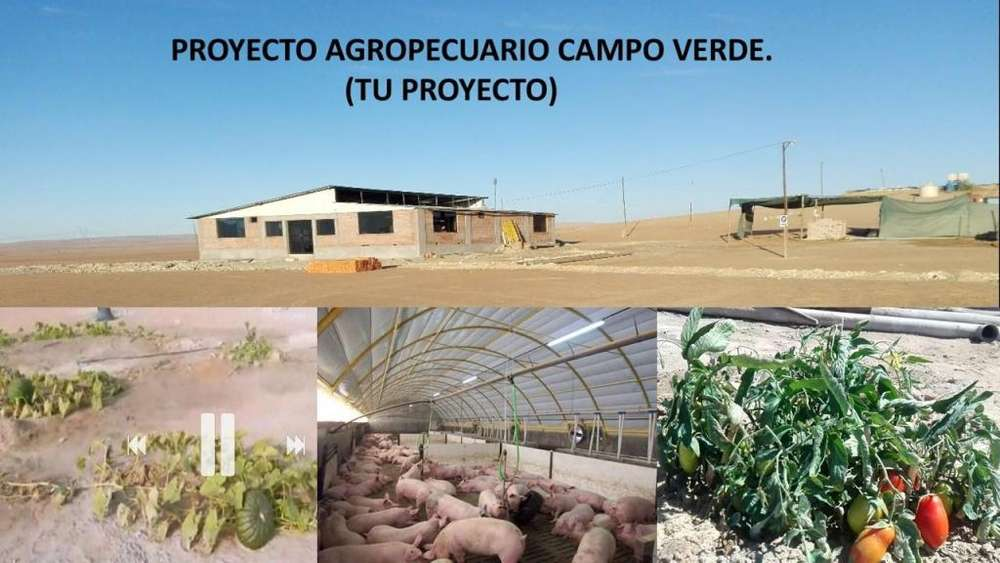 PROYECTO AGROPECUARIO CAMPO VERDE OFRECE PARCELAS DE TRES HECTÁREAS (30000 M2) Y DE 1000 M2. PEDREGAL
