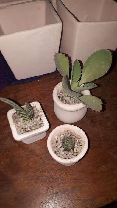 Suculentas Y Cactus Sowvenir Regalos