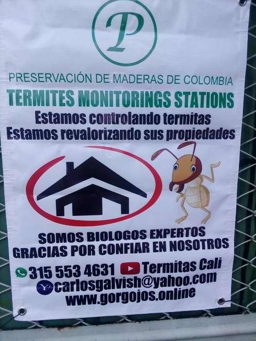 Control de Termites