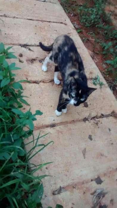 Doy en Adopcion Hermosa Gatica